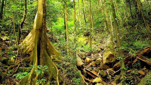 View of trees at the Daintree National Park in Australia