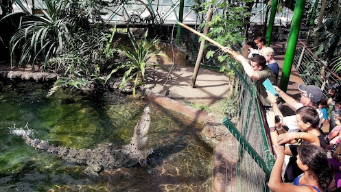 A huge saltwater crocodile at the Cairns ZOOM and Wildlife Dome