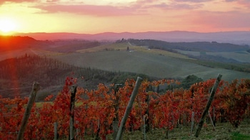 Chianti & San Gimignano Sunset Small Group Tour from Siena