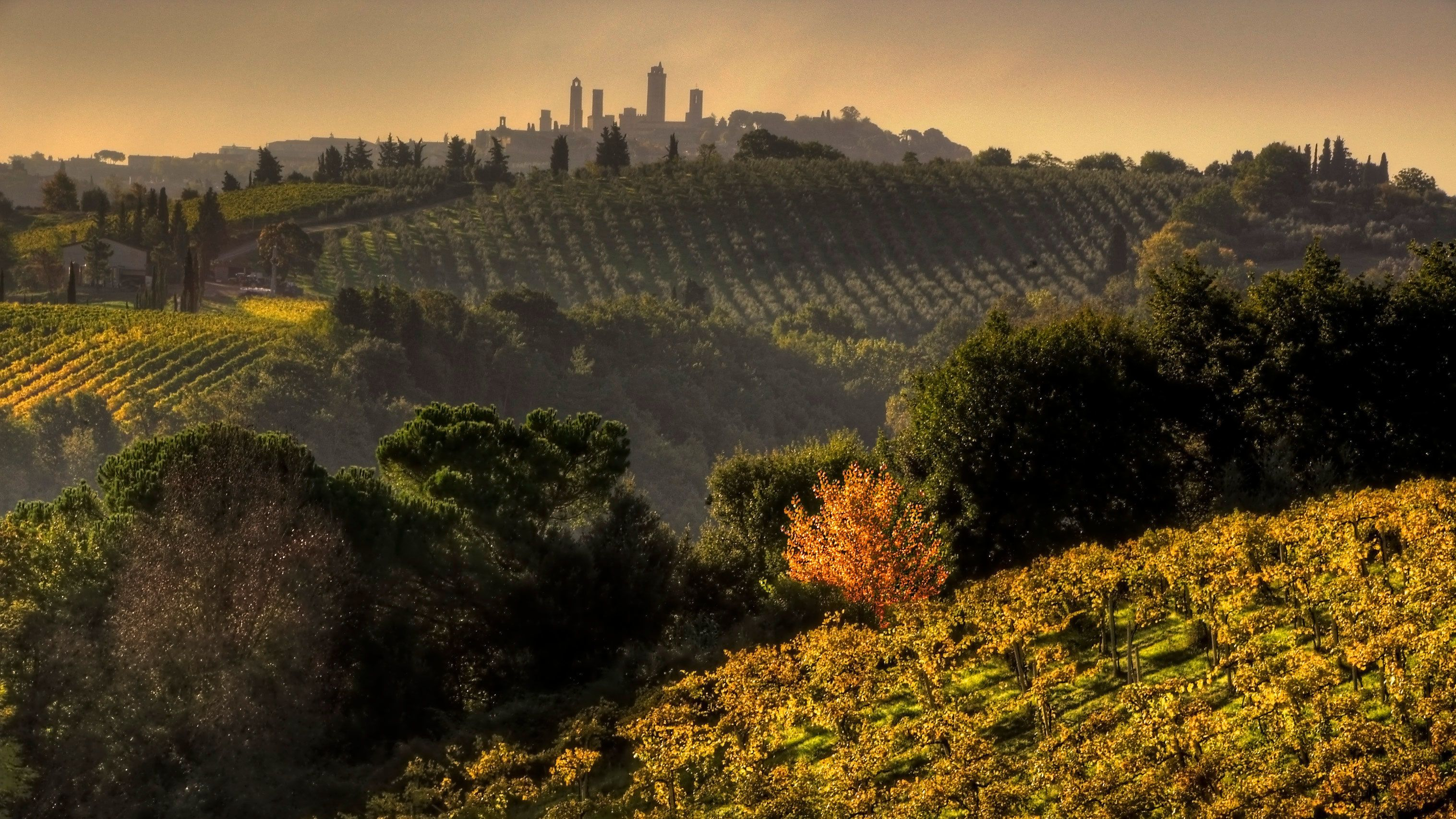 vineyards covering the rolling hills in Italy