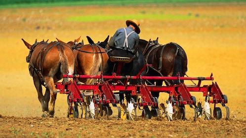 Amish farmer with horse drawn plow in Pennsylvania