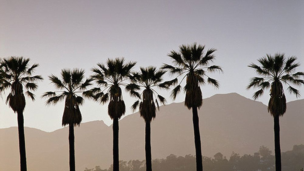 Los Angeles palm trees and mountains.
