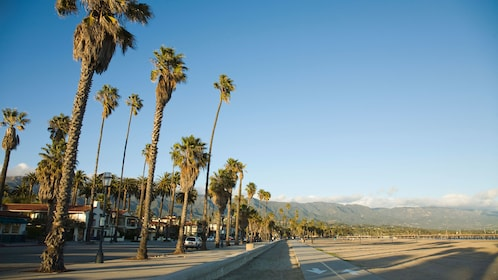 Santa Barbara beachfront with palm trees in Los Angeles.