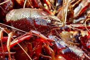 A Traditional Crawfish Boiling Experience