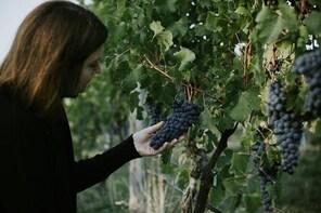 Rowlee Wines - Vine to Table