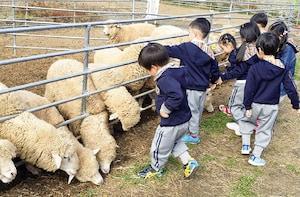 Yangpyeong Sheep Ranch Ticket