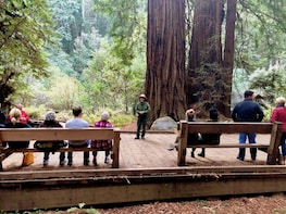 Muir Woods + Fisherman's Wharf + Sausalito Tour