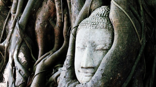 Statue tangled in tree roots in Bangkok