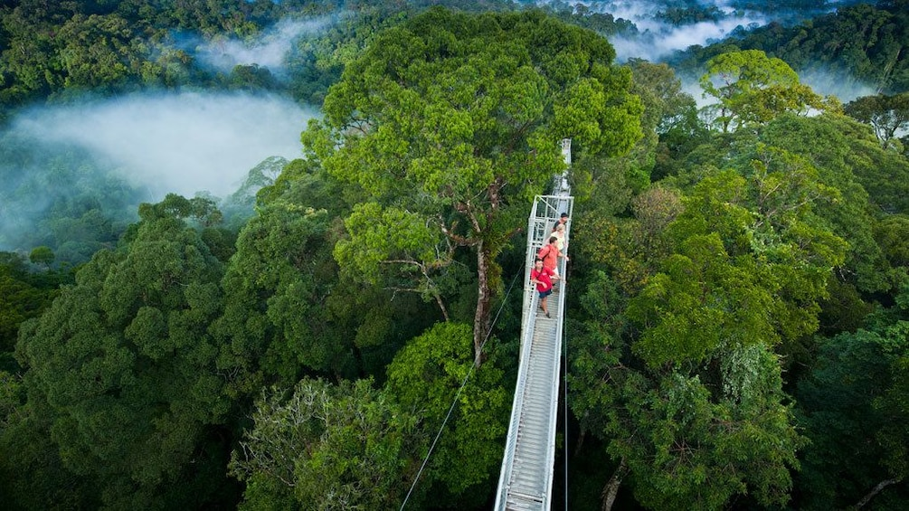 Show item 1 of 5. Aerial view of the suspension bridge at Ulu Temburong National Park
