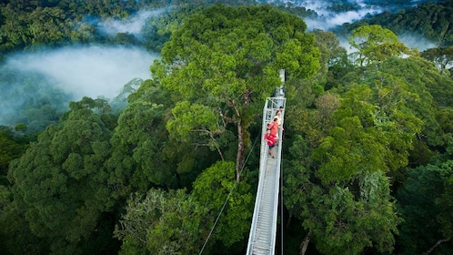 Aerial view of the suspension bridge at Ulu Temburong National Park