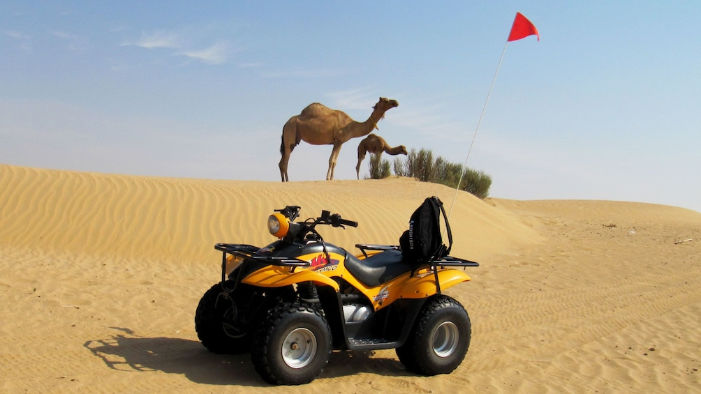 Show item 4 of 8. ATV in front of camels on sand dune in Abu Dhabi