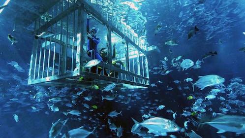 man inside diving cage watching fish in Abu Dhabi