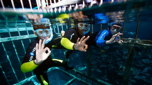 three divers in snorkeling gear inside cage under water in Abu Dhabi