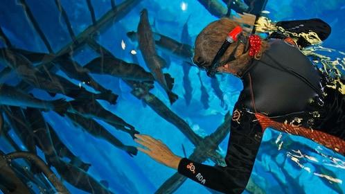 man in snoker gear watching fish swim in Abu Dhabi