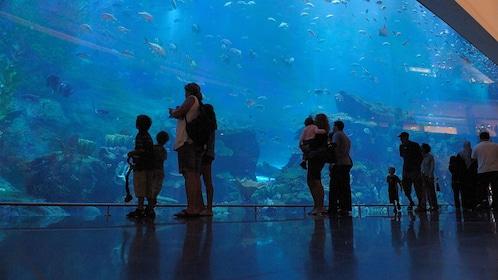 group of tourist inside aquarium in Abu Dhabi