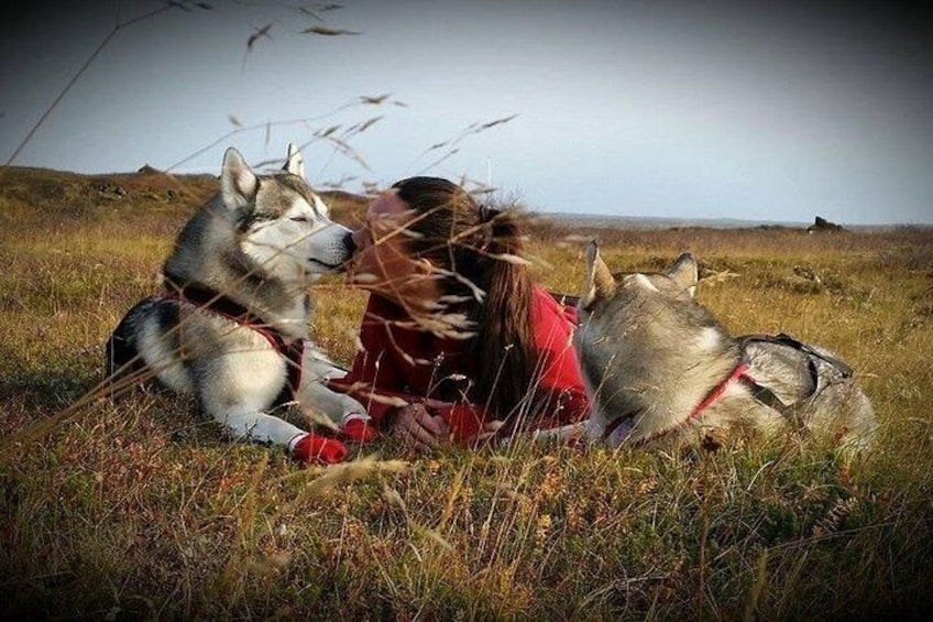 Show item 5 of 11. Husky Petting and Pictures in Akureyri