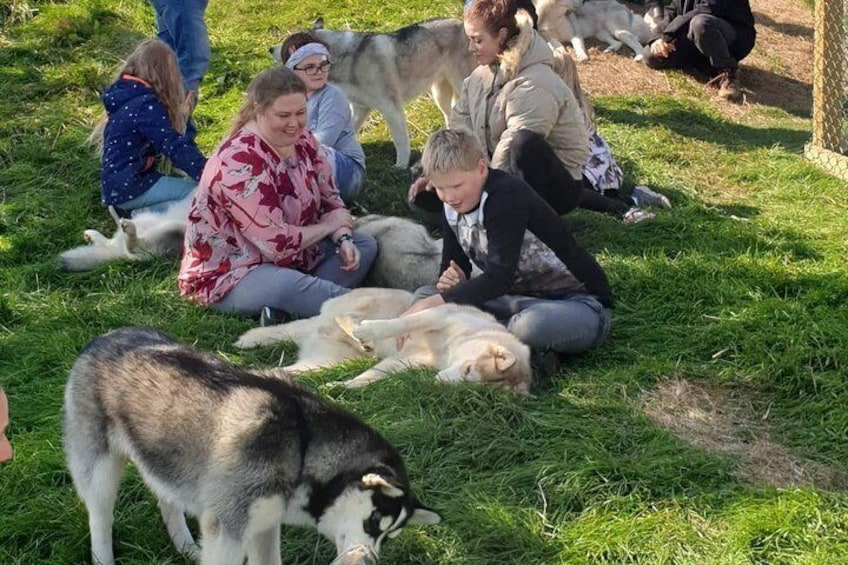 Show item 3 of 11. Husky Petting and Pictures in Akureyri