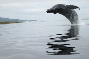 Ketchikan Whale Watching and Nature Tour