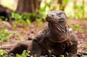 A Day to Komodo Island
