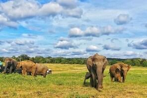 Jeep Safari at Kaudulla National Park
