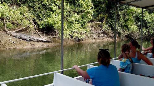 Guests enjoying a scenic guided cruise on the Daintree River