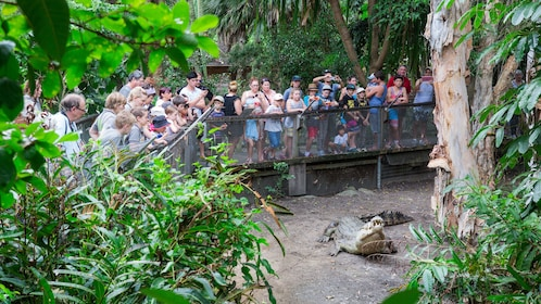 Guests in awe of the crocodile at the