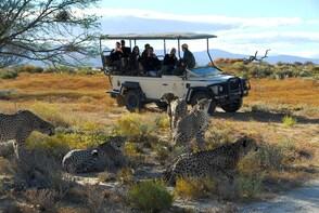 Cape Full Day Safari