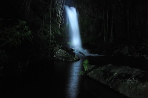 Nocturnal Rainforest and Glow Worm Tour