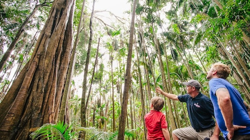 exploring forest in gold coast