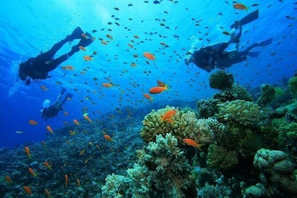 Pulau Payar Island Snorkeling and Diving Day Tour Including Lunch