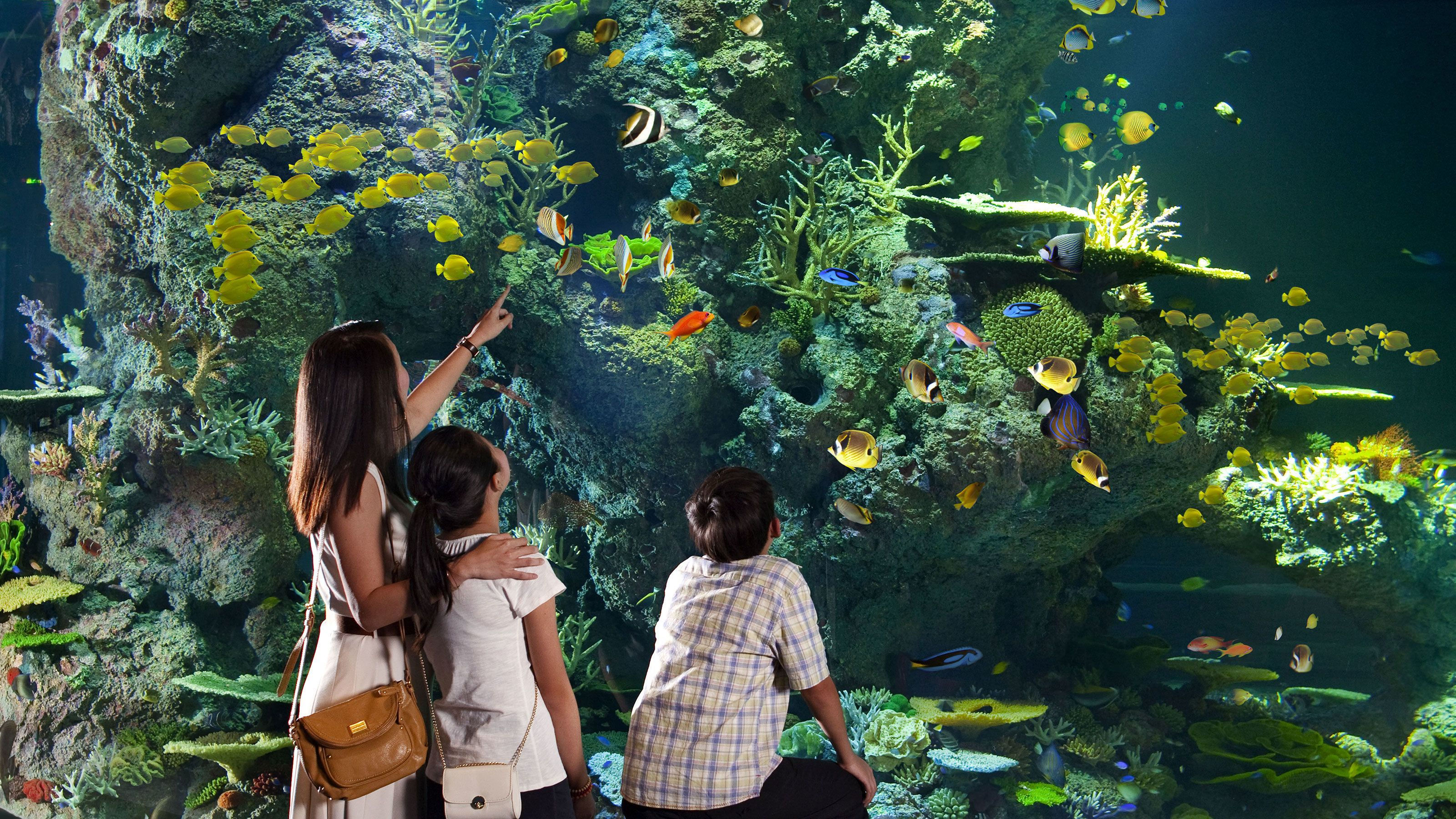 Mother with children looking at the tropical fish in the SEA Aquarium in Singapore