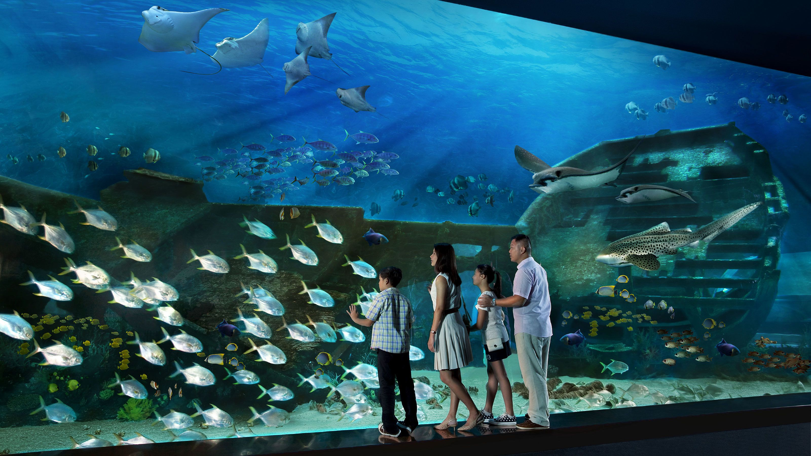 Family looking at large school of fish near the glass at the SEA Aquarium in Singapore
