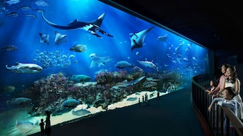 S.E.A. AquariumTM 1-Day Ticket with Hotel Pickup