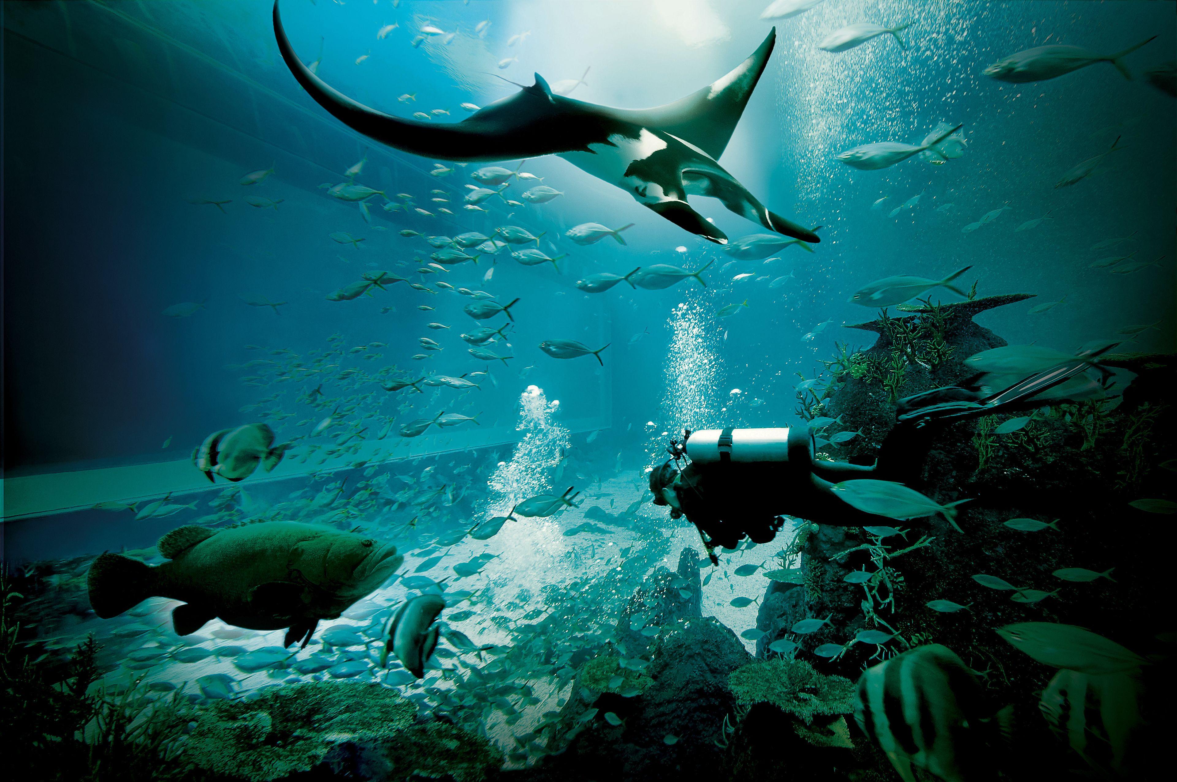 S.E.A. Aquarium.jpg