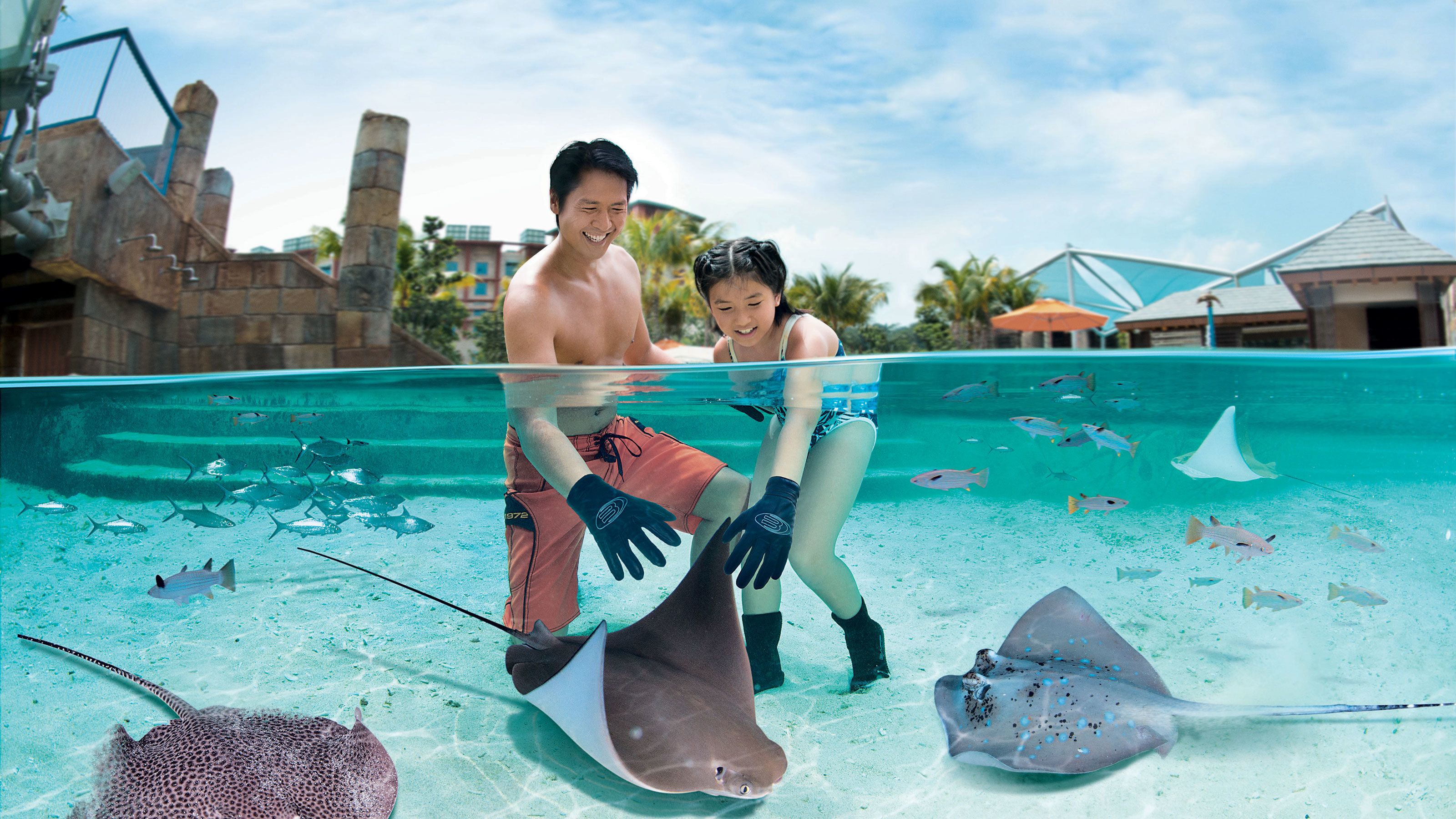 Dad and daughter in manta ray tank touching a manta ray with gloves on in the adventure cove waterpark in singapore