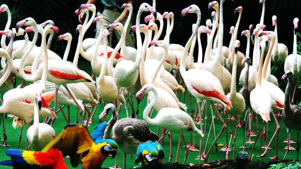 Flamingos and macaws at the Jurong Bird Park in Singapore