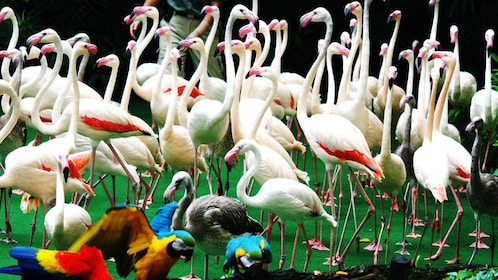 Flamingos and macaws at the Jurong Bird Park in Singapore