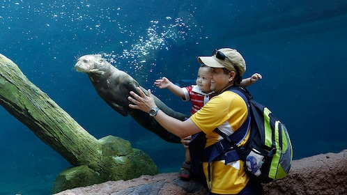 Man with small baby looking at otter in water at the River safari in singapore
