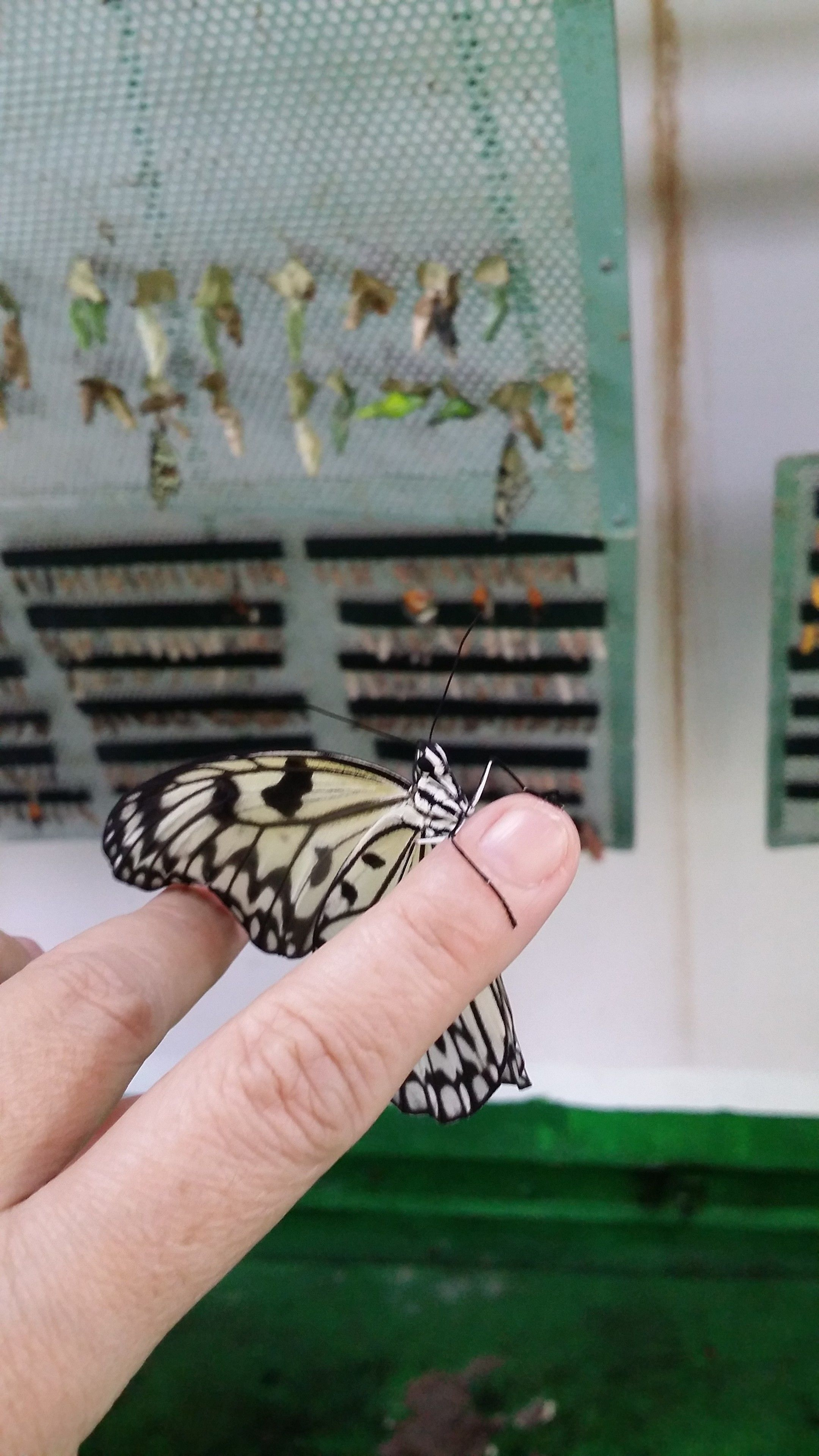 Butterfly Park & Insect Kingdom.jpg