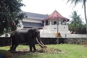 Colombo to Kandy Private Day Tour