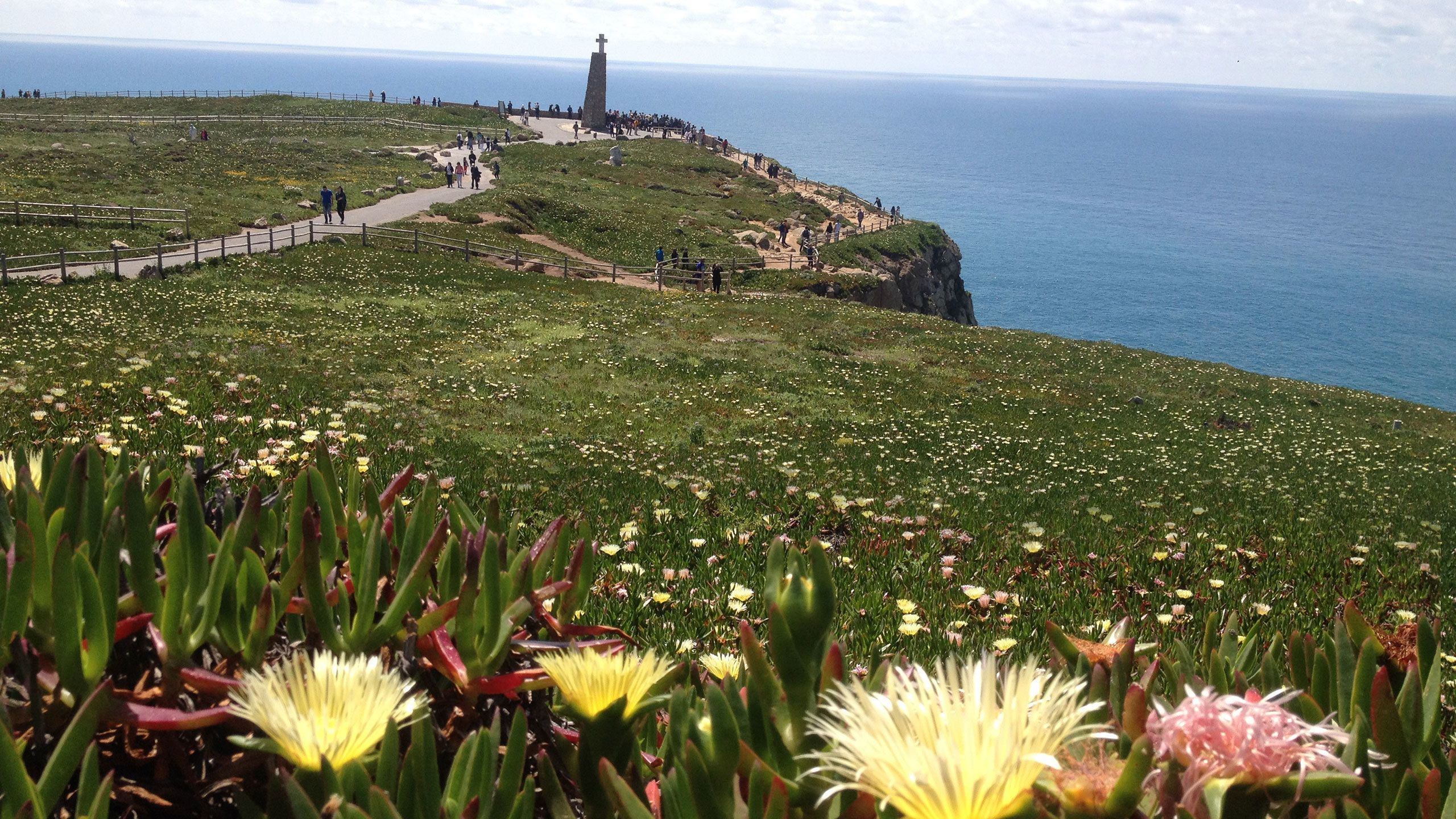 field of grass and flowers at the coastline cliff in Portugal