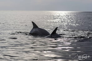 Marco Island Dolphin, Birding and Shelling Tour - 2 Hours