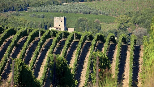 Vineyard view on Fiat 500 Vintage Tour in Tuscany Italy