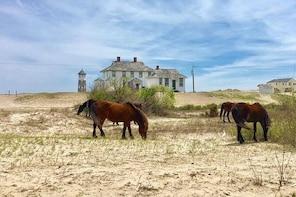 Outer Banks Wild Horse Tour