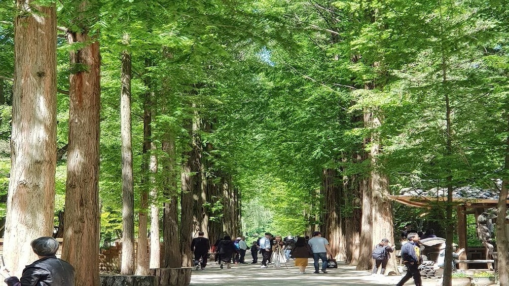 Show item 6 of 6. Full Day Nami Island with Petite France (filming location)