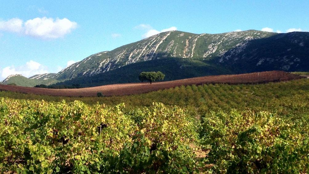 Apri foto 4 di 5. large patch of vineyard in Portugal
