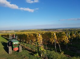 Half-Day Wine Tour From Strasbourg