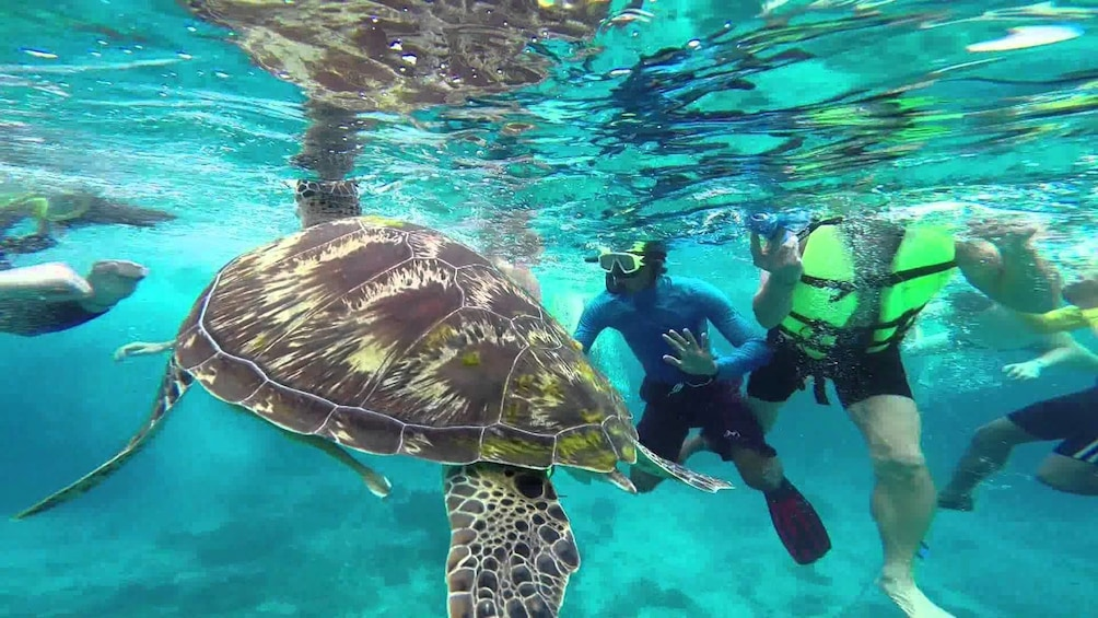 Similan Islands Excursion by Speedboat