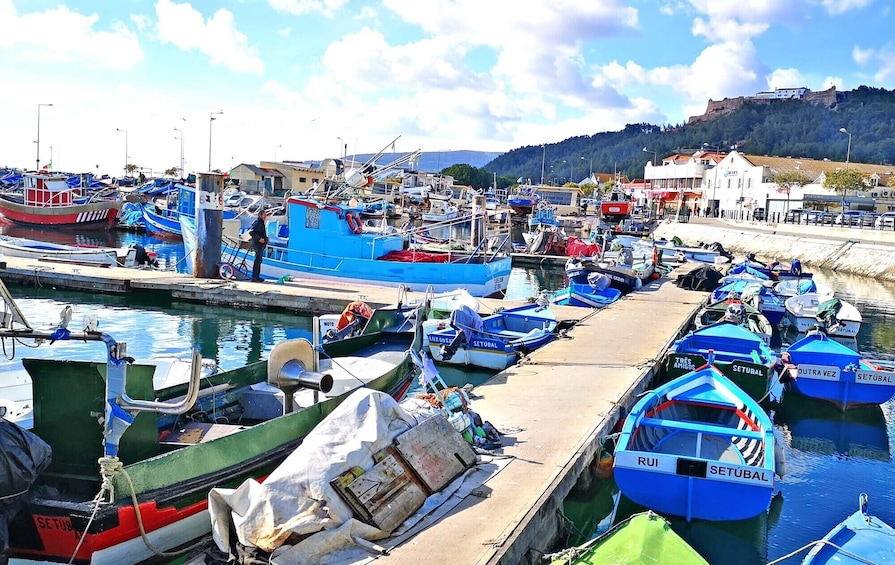 Show item 2 of 10. Portuguese Best Fish Market and south Lisbon Nature Wonders