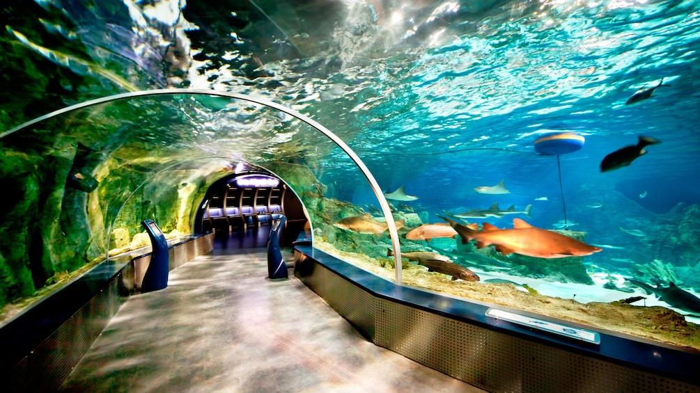 Carregar foto 3 de 5. Aquarium at the Istanbul Aquarium Theme Park